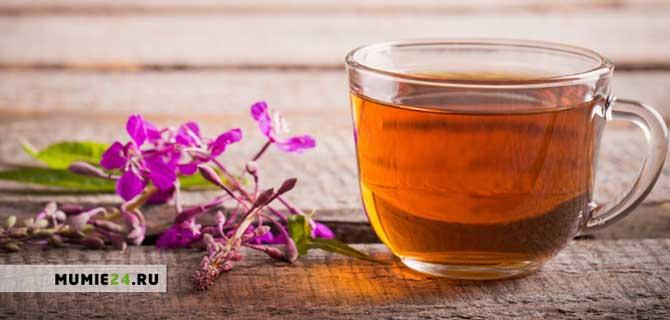 Иван чай польза и вред